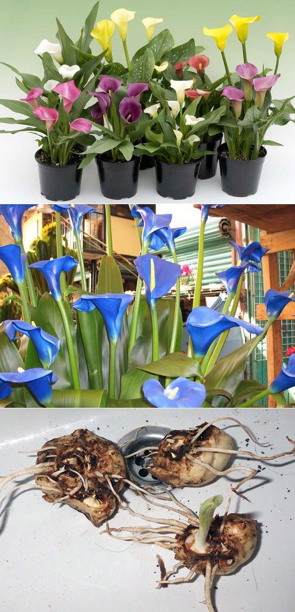 Причины плохого роста и цветения чубушника в открытом грунте, после пересадки