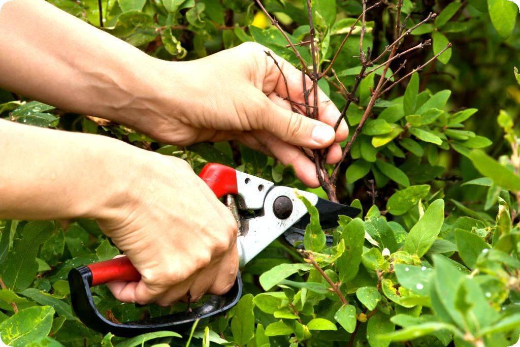 Чем подкормить пионы осенью: виды удобрений в зависимости от типа почвы