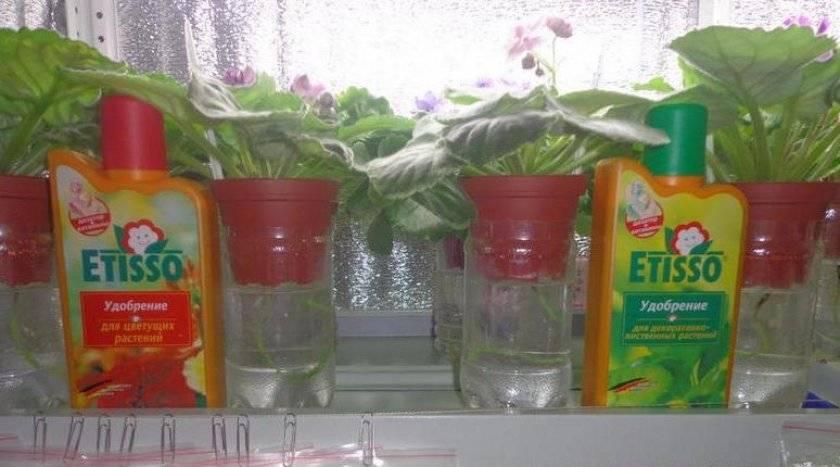 Подкормка фиалок для цветения дома готовыми удобрениями и народными средствами