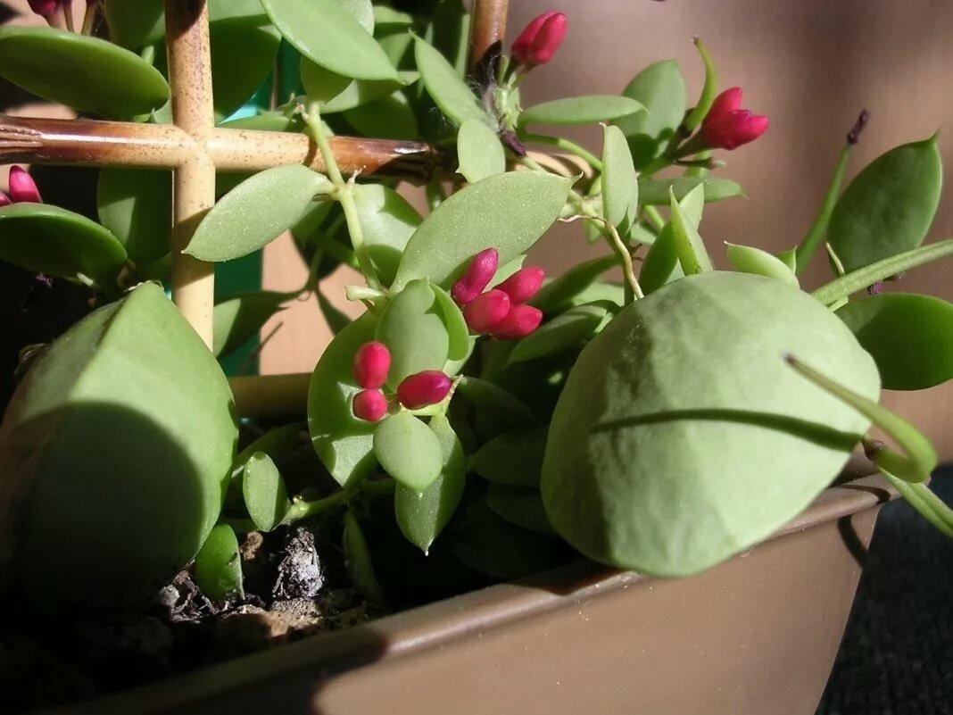 Кашпо с ампельными растениями для улицы и для квартиры