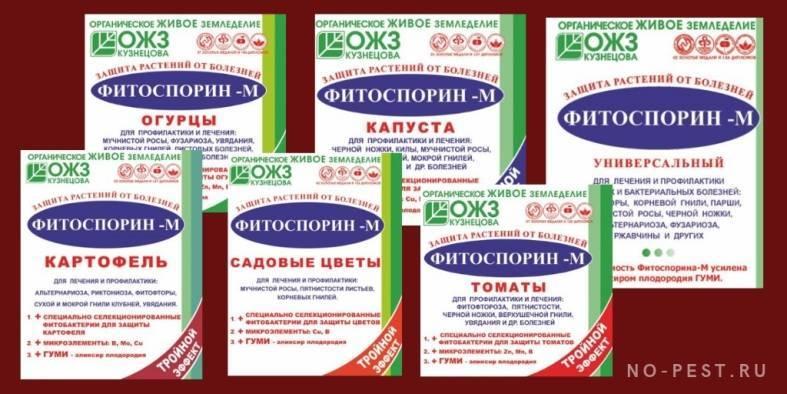 Состав и применение препарата фитоспорин для растений
