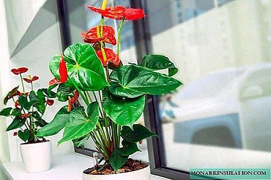 Комнатные цветы и растения для спальни, ставят ли герань и фиалки в спальне
