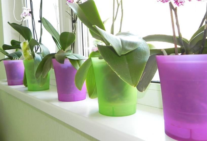 Горшок для орхидеи: какой нужен, как выбрать, в какой сажать, какие должны быть - кашпо или стеклянные горшки, размер и фото