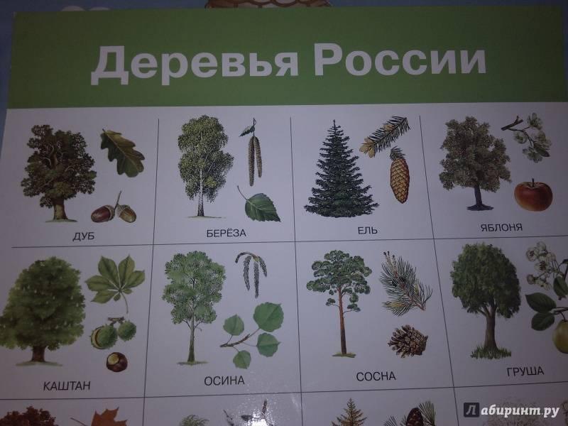 Вечнозеленые растения: деревья и кустарники в ландшафтном дизайне сада