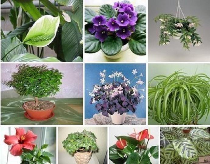 Какие комнатные растения считаются цветами любви