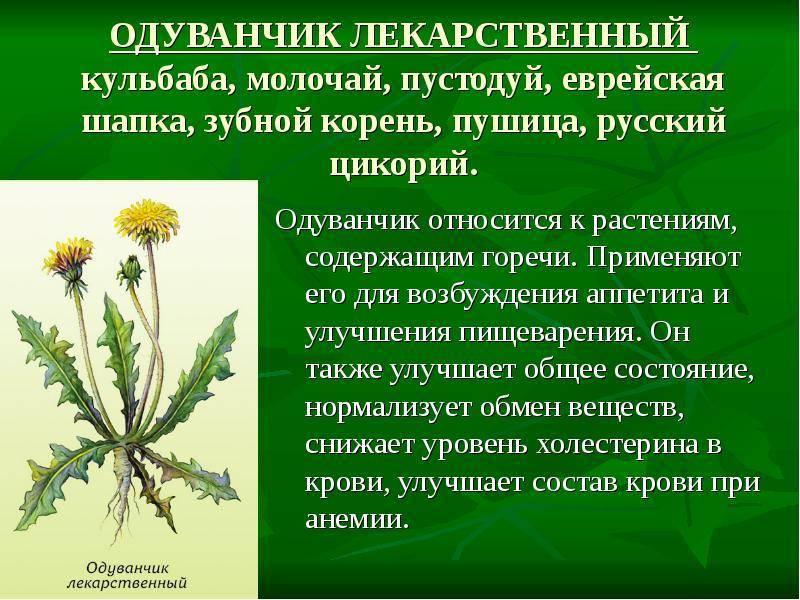 Крестовник (сенецио, клейня): описание разновидностей растения с фото