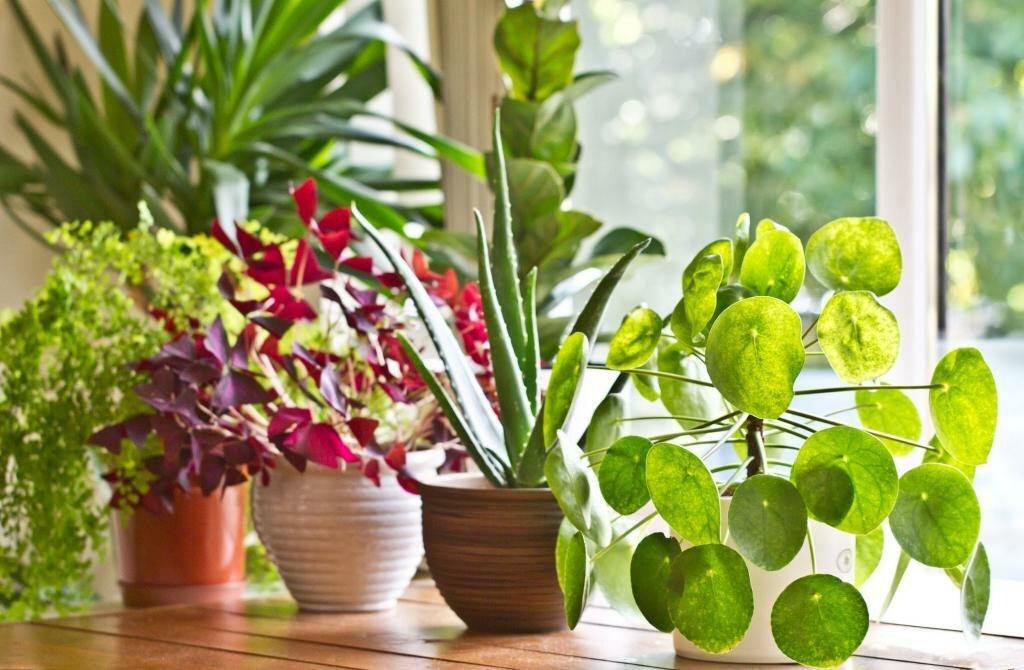 кто способен благоприятные растения для дома фото с названиями есть родные