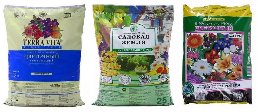 Можно ли сажать спатифиллум в кашпо или прозрачную емкость? критерии выбора горшка для выращивания цветка
