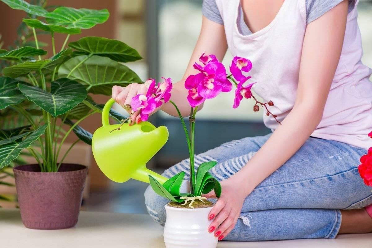 Уход за орхидеей: примеры выращивания цветка в домашних условиях