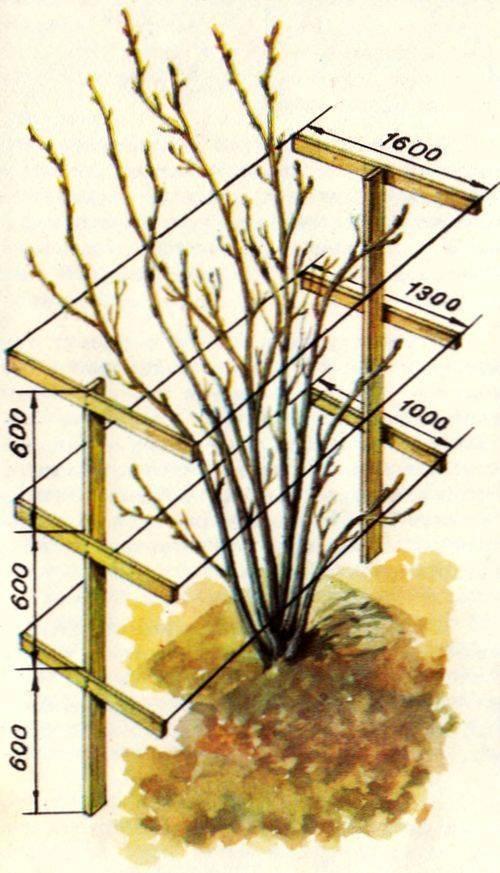 Как сажать крыжовник весной и осенью. секреты хорошего урожая крыжовника. | садовый участок