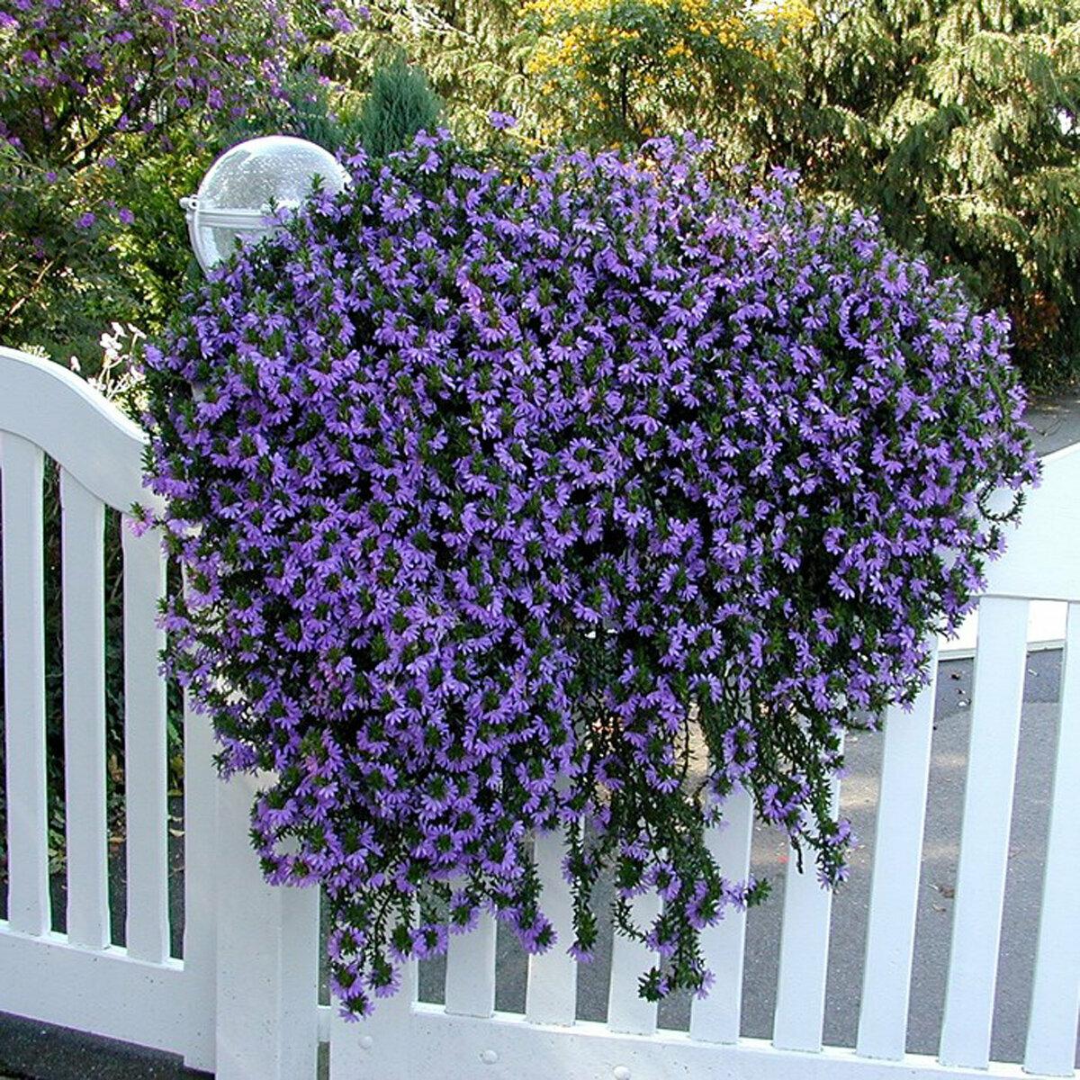 Ампельные растения для сада: примеры лучших сортов и некоторые дизайн-идеи