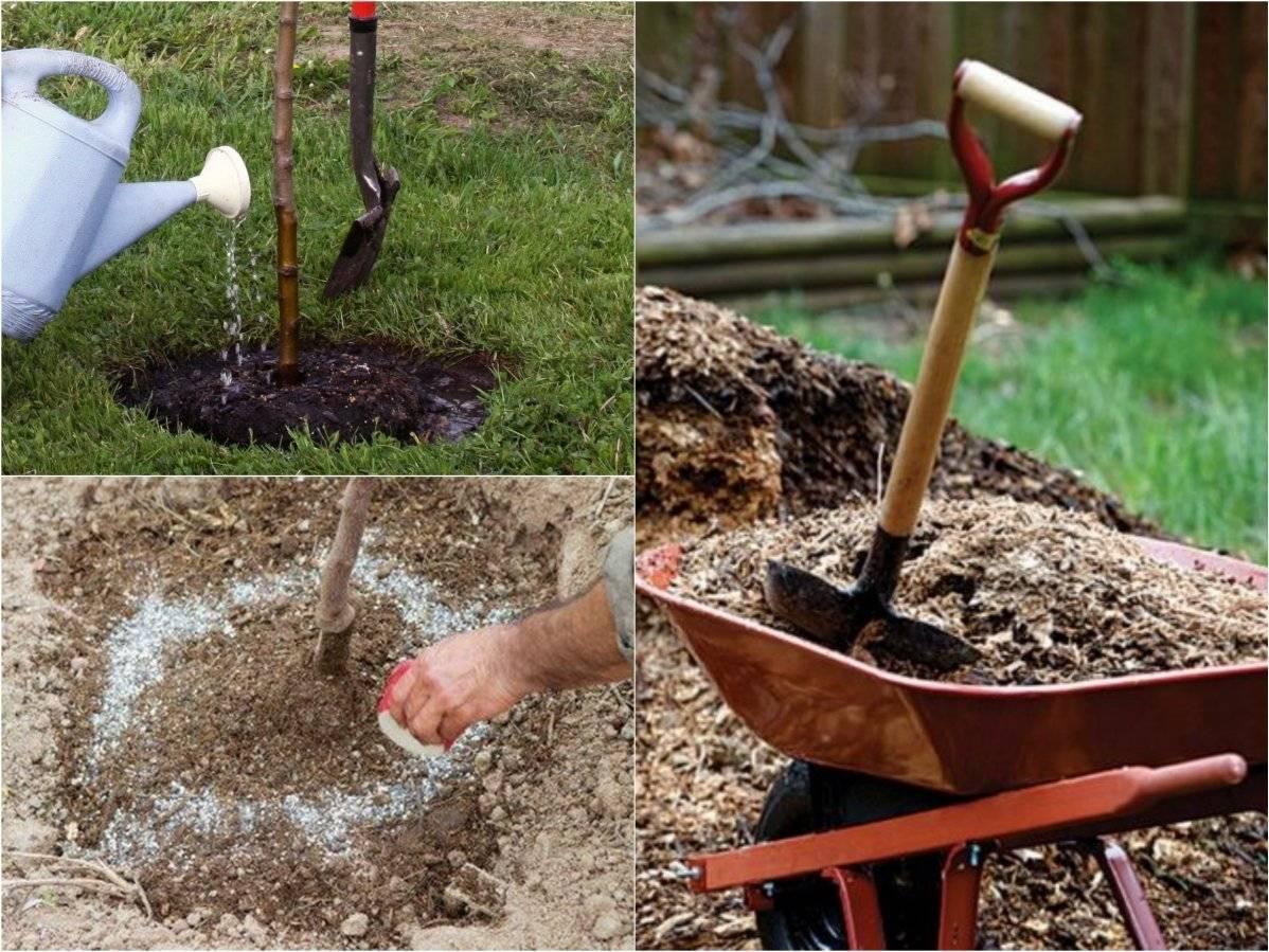 Ситник - описание, особенности выращивания, ухода и размножения