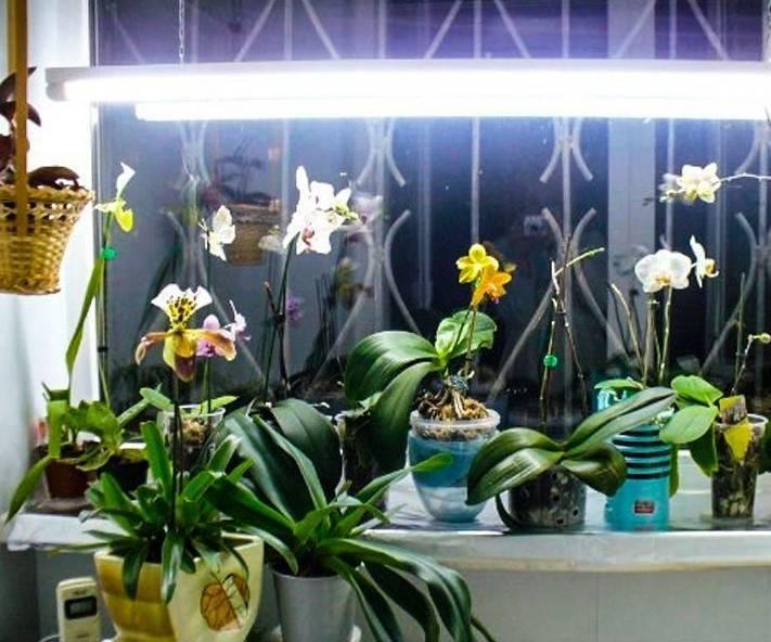Почему желтеют листья у орхидеи - pocvetam.ru