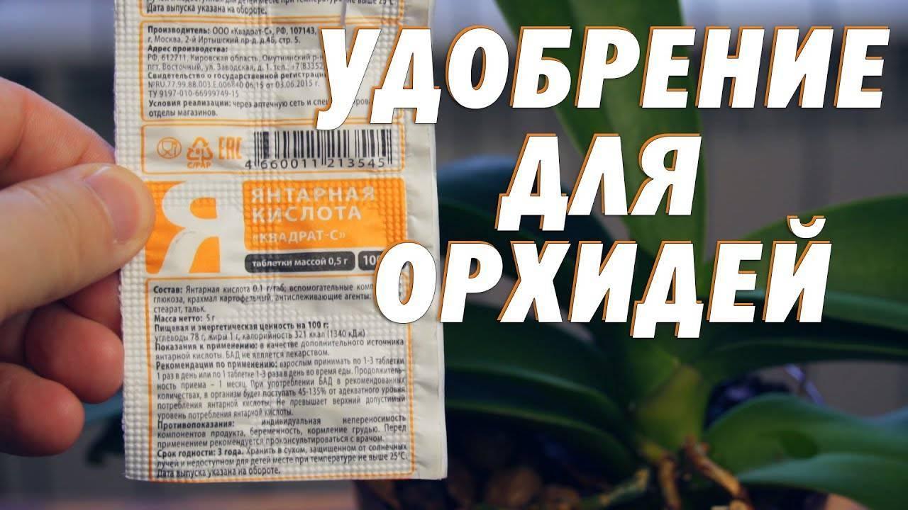 Применение янтарной кислоты для орхидей: приготовление раствора, правила полива и обработки