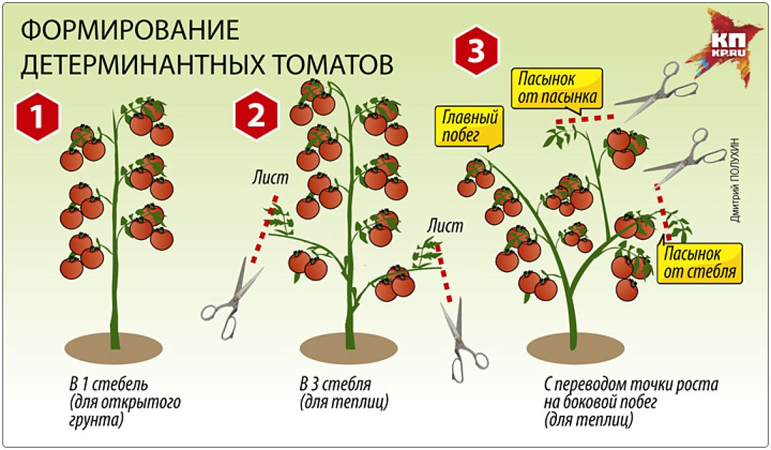 Формирование кустов томатов в теплице: для чего нужна эта процедура при выращивании помидоров, что требуется для ее проведения, какие существуют способы?