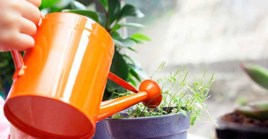 Гузмания: пересадка растения и уход в домашних условиях