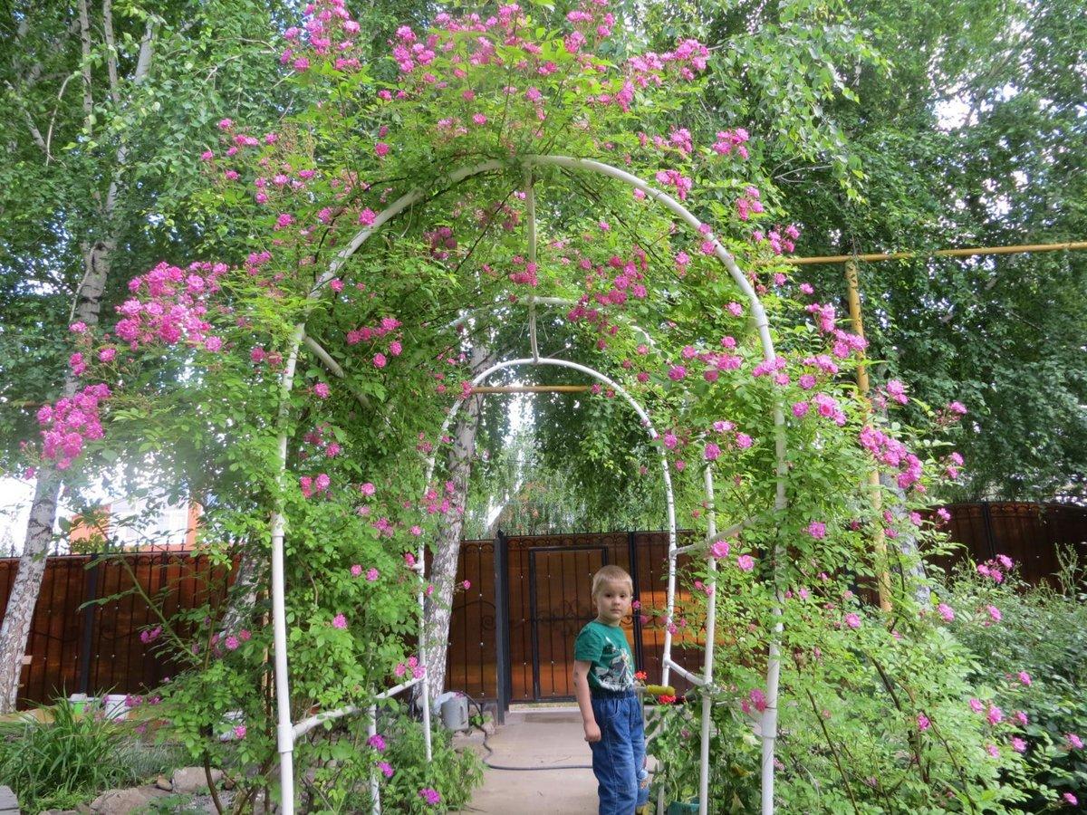 Делаем опору для клематиса: изготовление арки и деревянной шпалеры