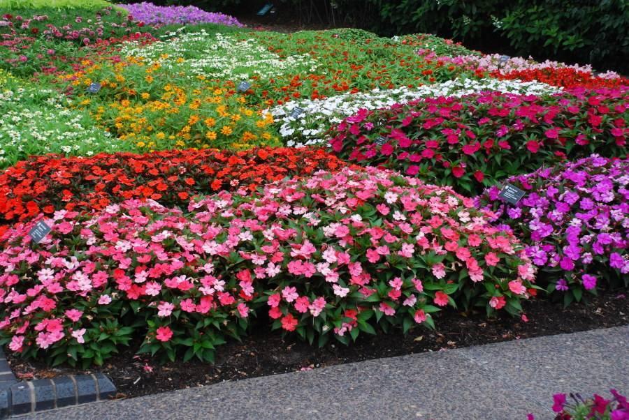 Кустарники в ландшафтном дизайне: какие выбрать и где посадить