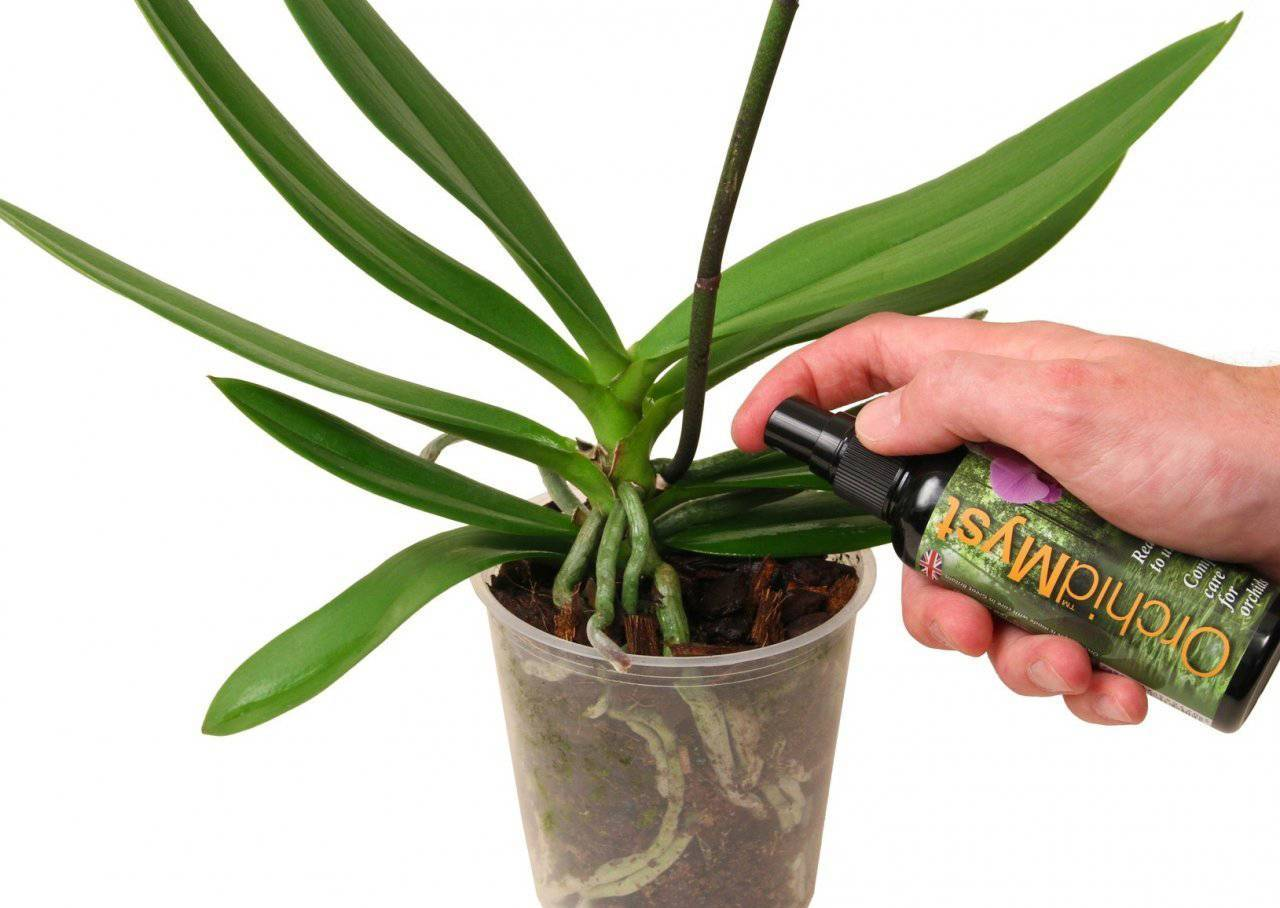 Уход за орхидеей в домашних условиях после покупки: размножение и пересадка