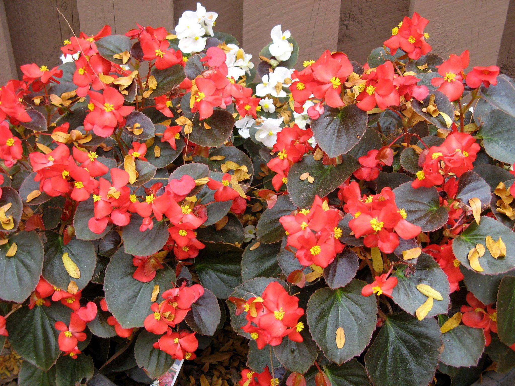 Какие цветы, цветущие круглый год, можно посадить в домашних условиях?