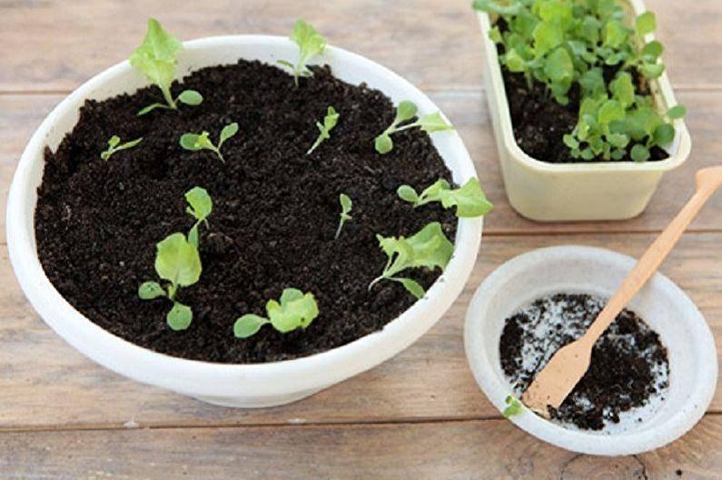 Выращивание фуксии из семян в домашних условиях: правила размножения. как выглядят семена фуксии и как их собрать? как правильно посадить семена?