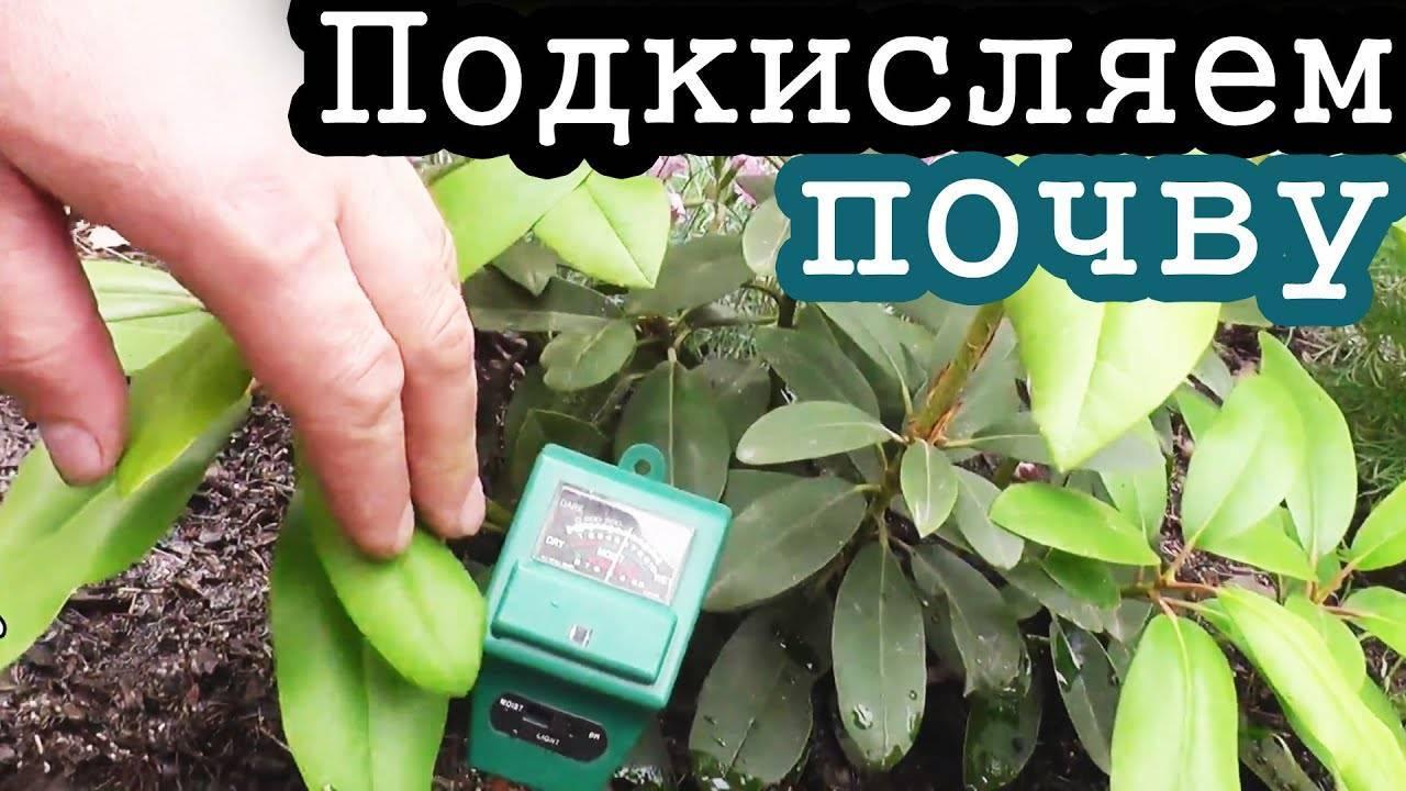 Как подкислить почву для гортензии