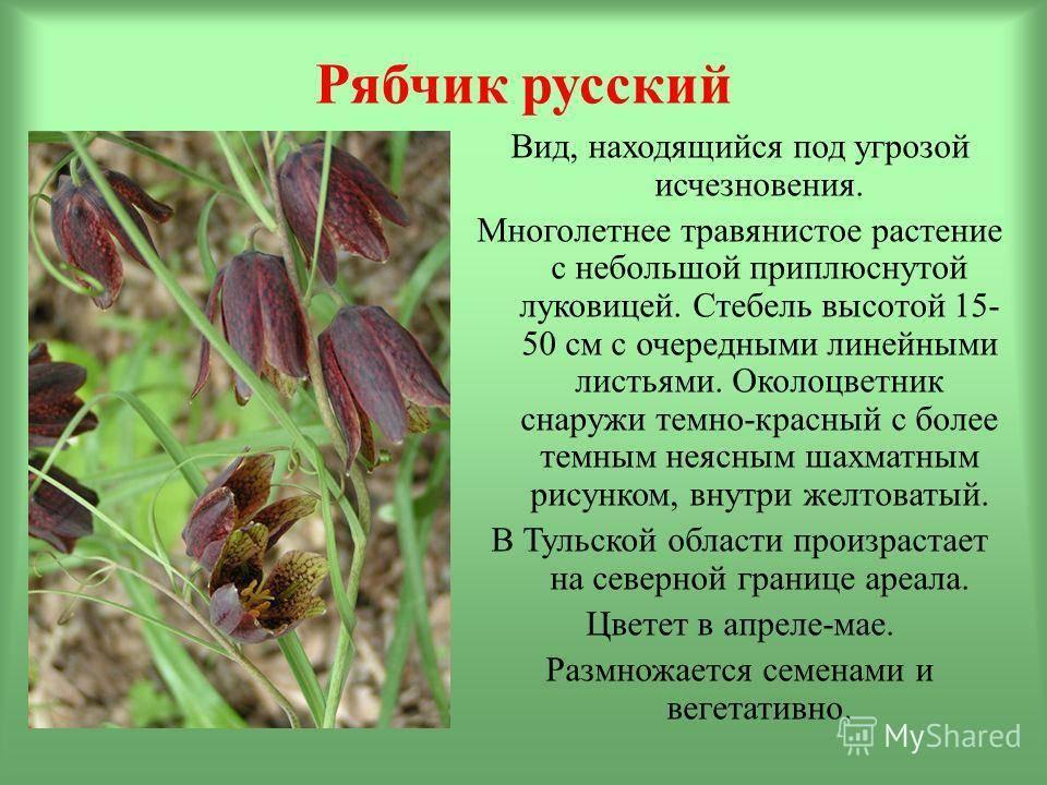 Цветы рябчики: виды и сорта, выращивание в открытом грунте