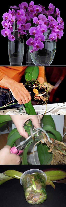 Почему не цветет орхидея: причины, методы борьбы
