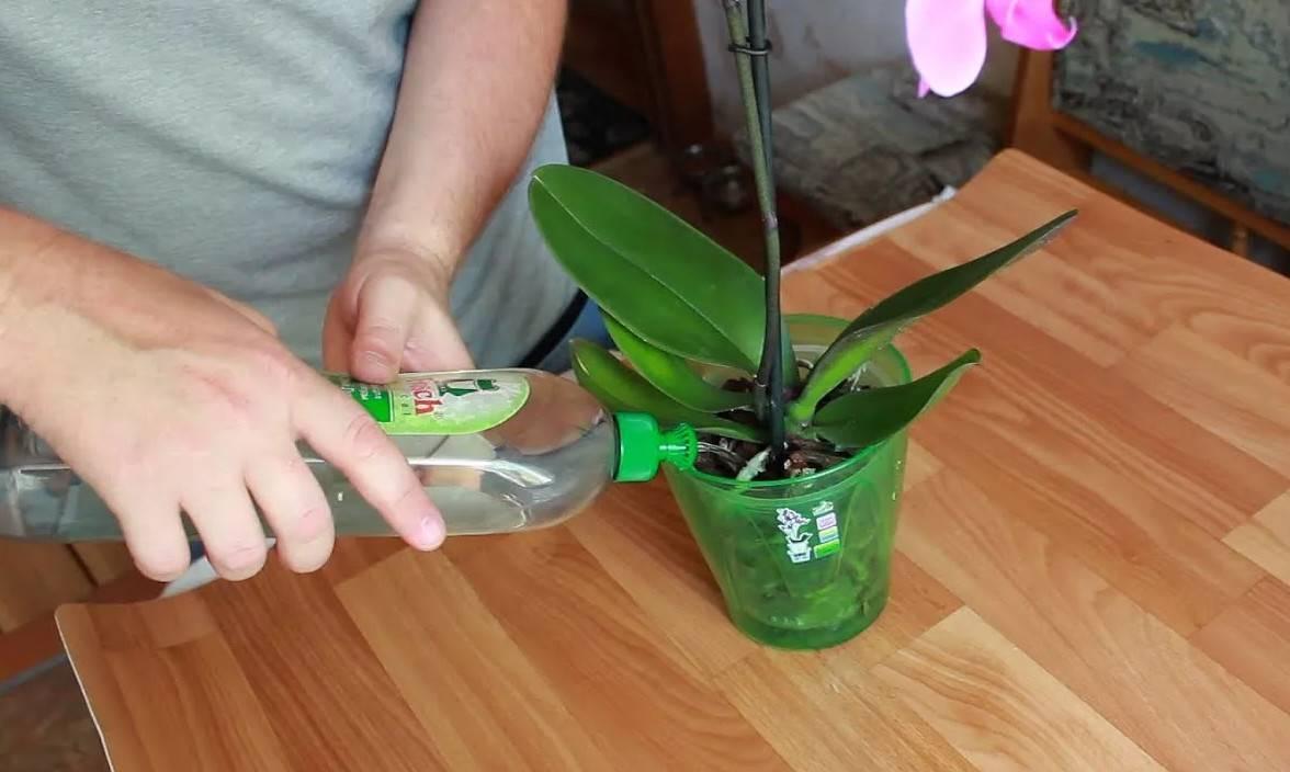 Цветение орхидеи, как заставить и почему не цветет дома: полив, стимуляция растения
