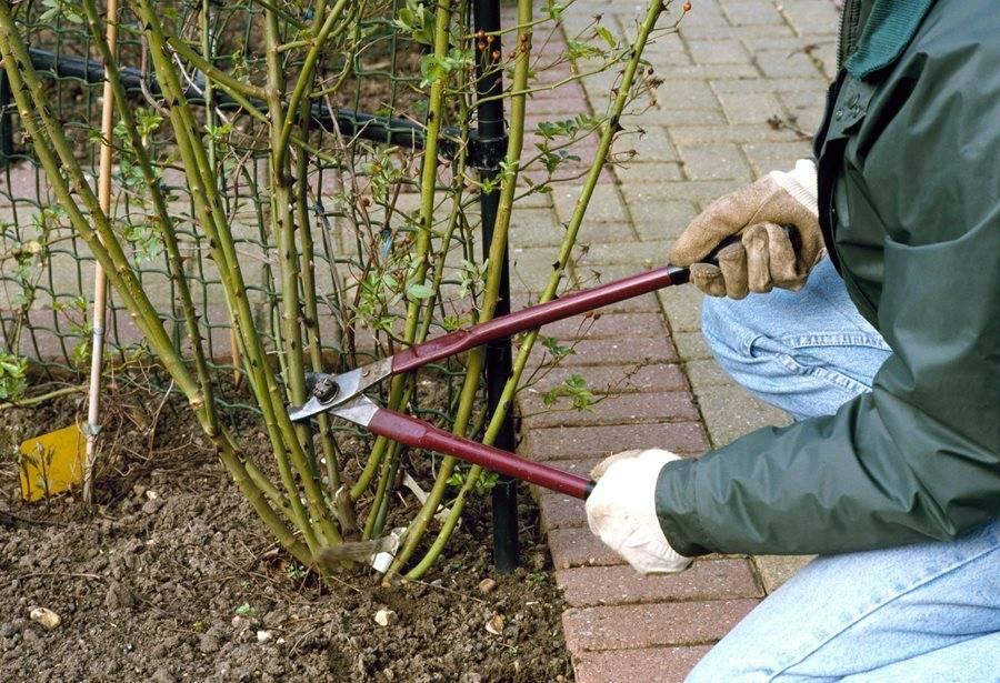 Правила и способы обрезки роз на зиму. заботимся и готовим кусты к новому сезону