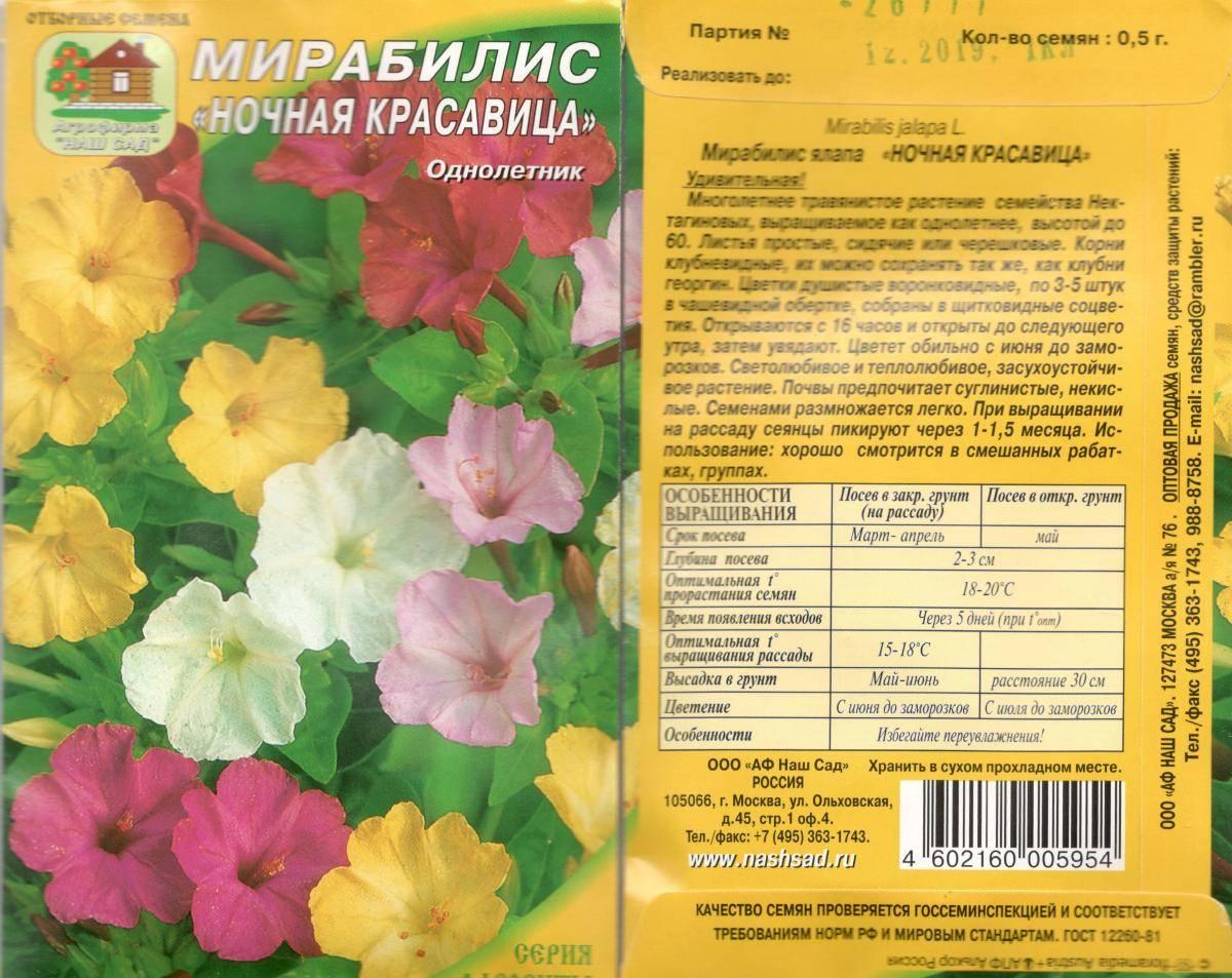 Мирабилис (mirabilis) – многолетний цветок «ночная красавица»