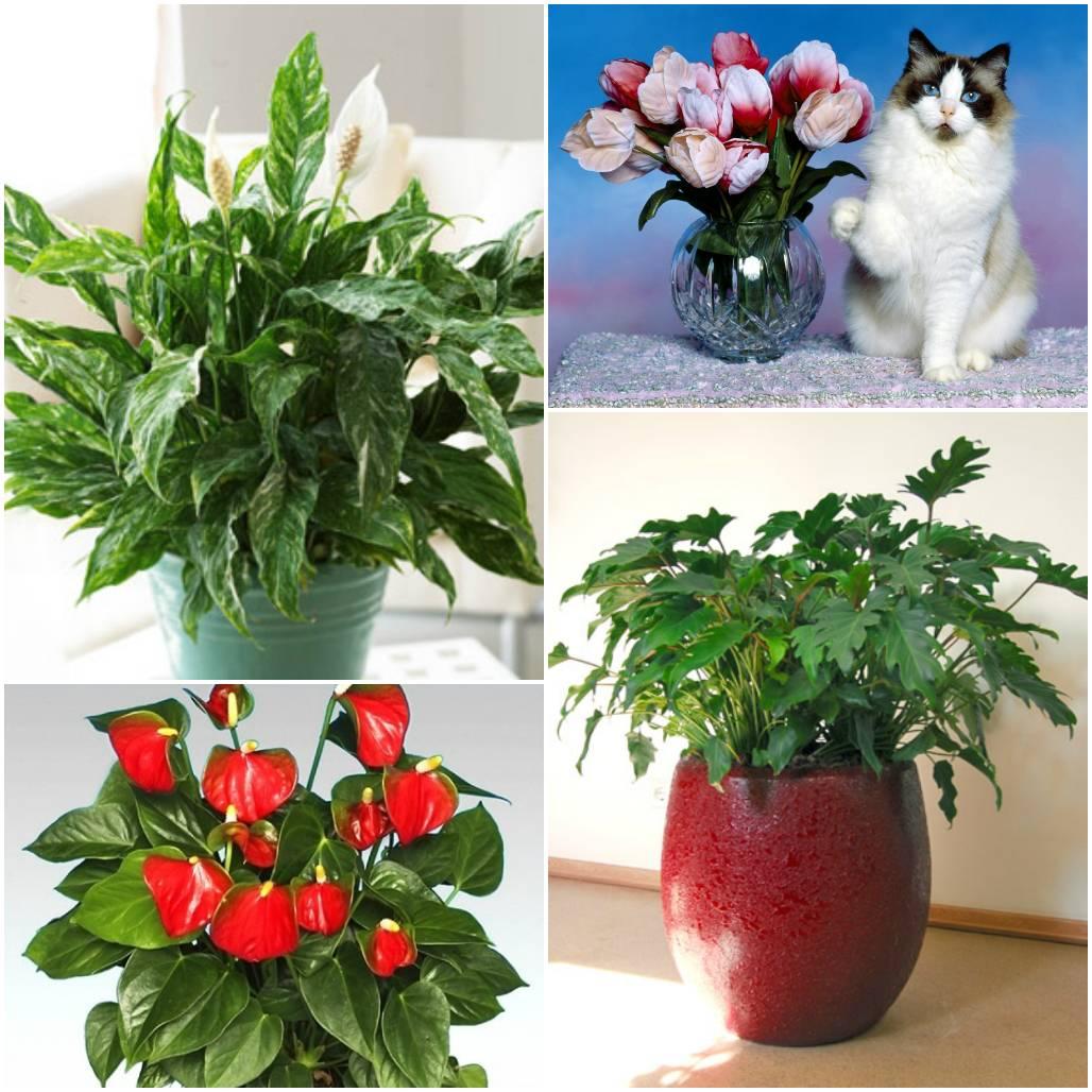 Как и какие выбрать комнатные цветы для дома - энциклопедия цветов