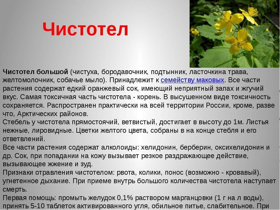 Растение крестовник обыкновенный и плосколистный: фото и описание, рецепты применения травы, цветков, листьев и корней