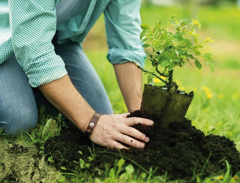 Деревья и кустарники в саду: посадка саженцев, соседство плодовых деревьев