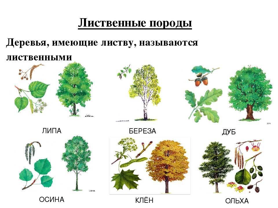 Деревья с цветами: красивые декоративные кустарники и деревья для дачи