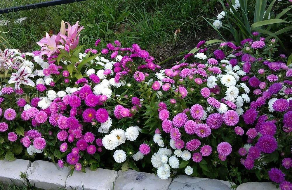 Какие бывают розы – обзор групп, типов и сортов