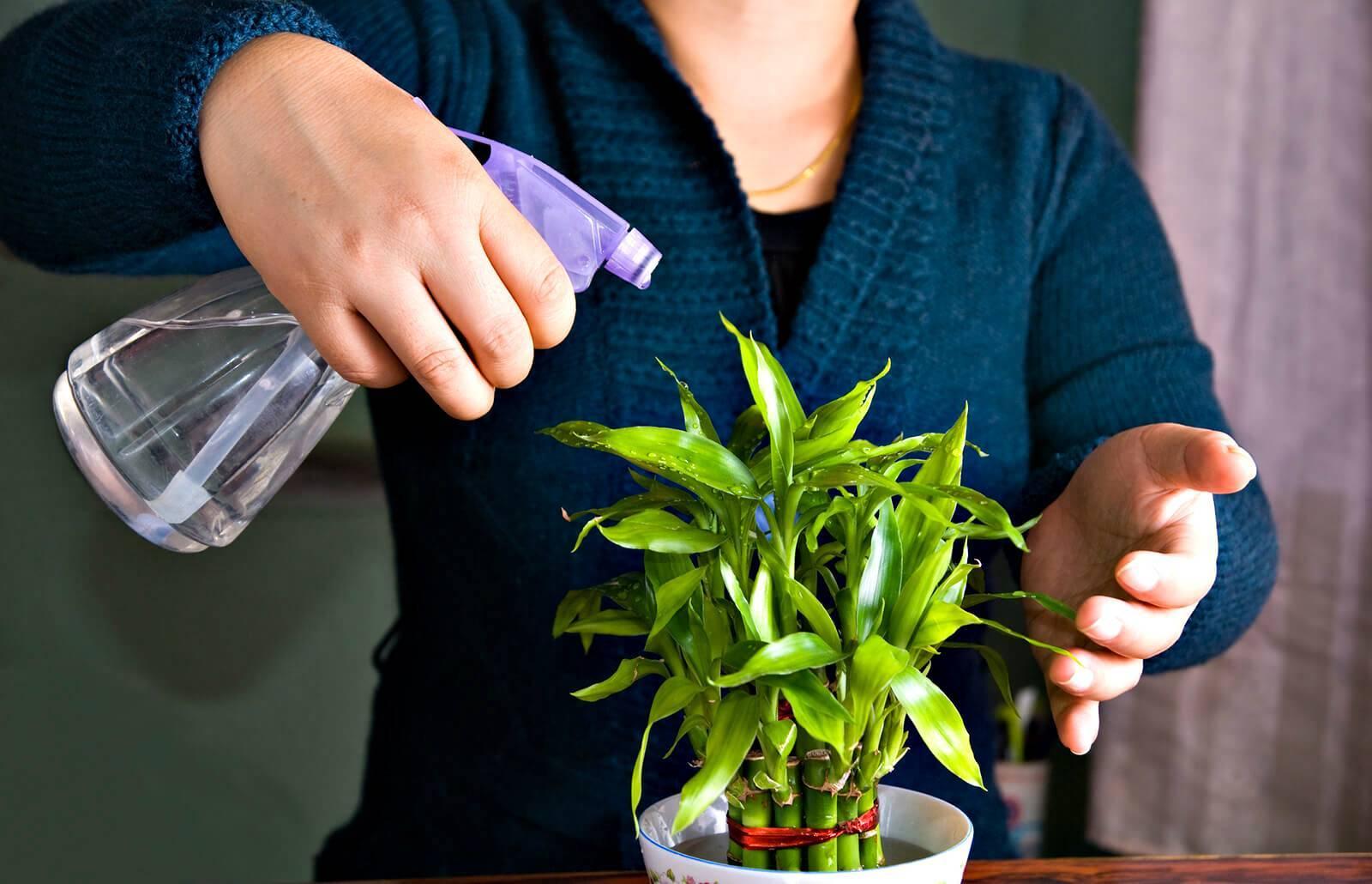 Как ухаживать за комнатной традесканцией в домашних условиях: разновидности цветка