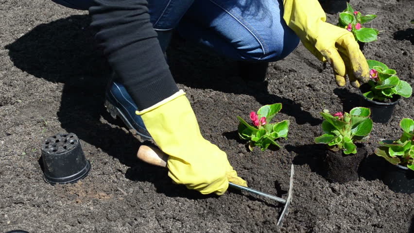 Герань садовая многолетняя: сорта с фото — названия и описание самых популярных видов: почвопокровная, низкорослая, блэк бьюти и других, а также выращивание