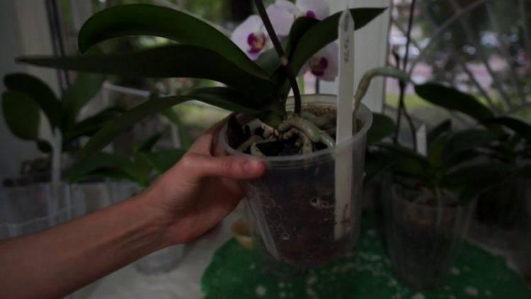 Избавляем комнатные цветы от мошки: как вылечить цветы от белой мошки