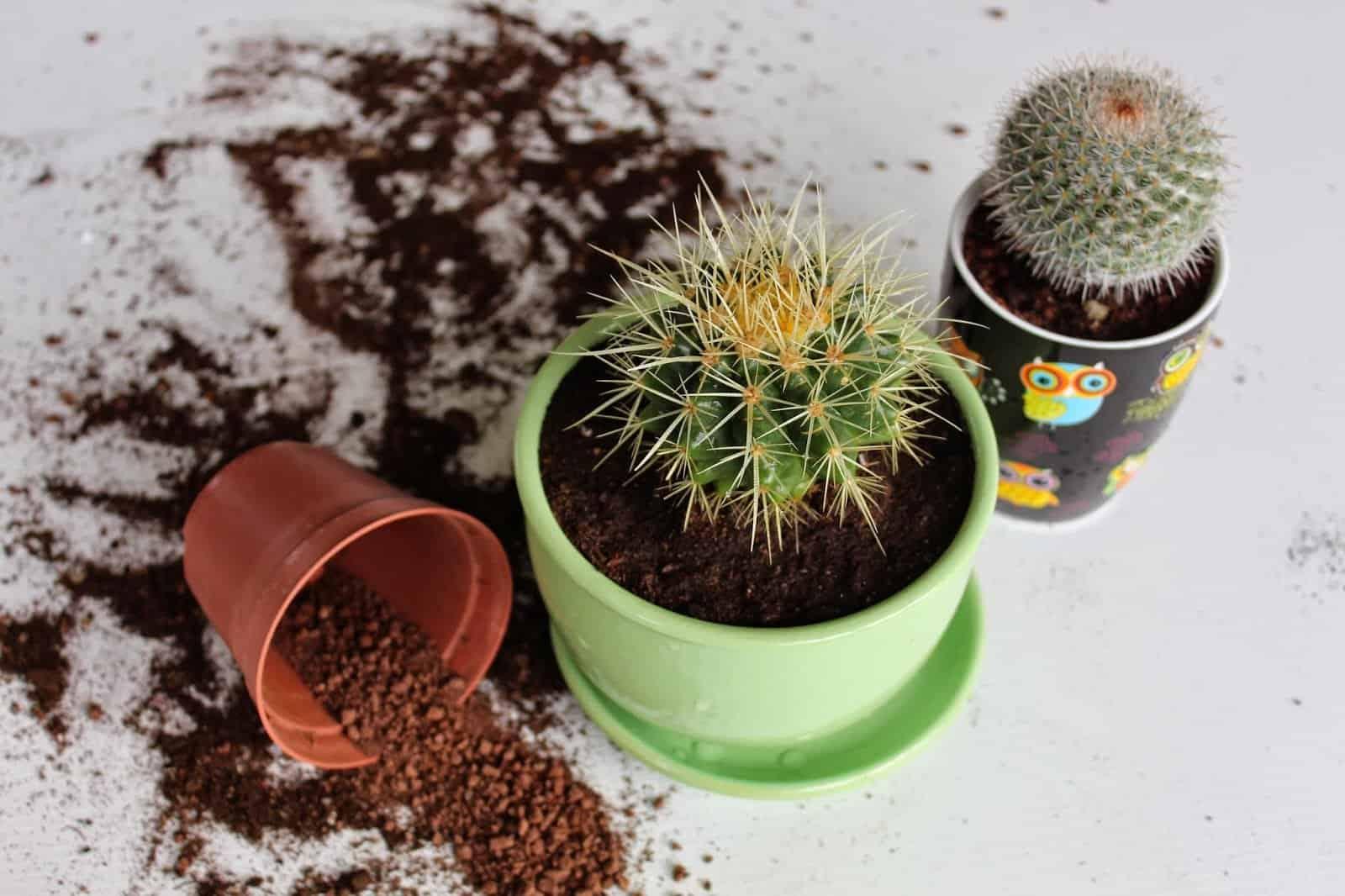 Как вырастить алоэ в домашних условиях: посадка и размножение