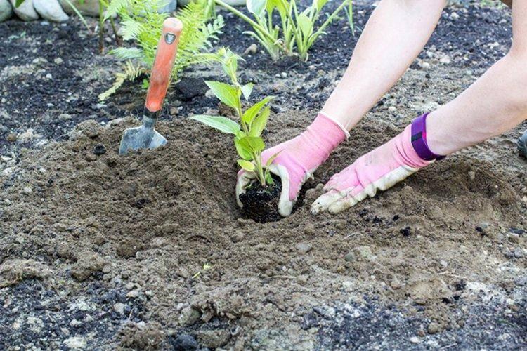 Виды садовых очитков – фото, названия и популярные сорта