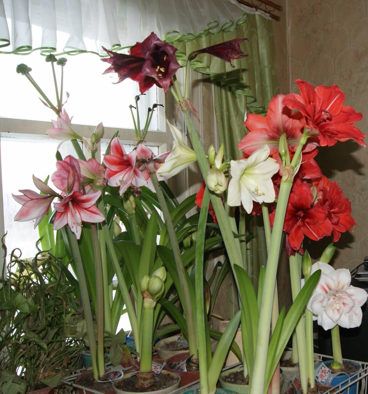 Бромелиевые: семейство комнатных растений, выращивание и уход дома