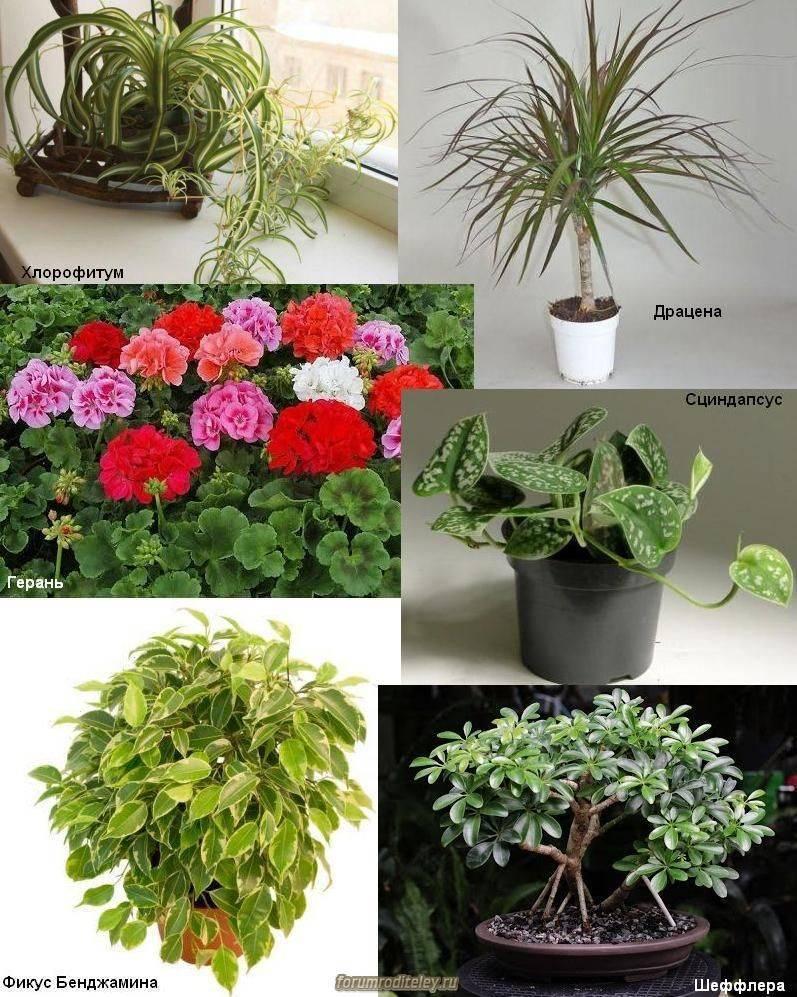 Какие цветы нельзя держать дома фото и приметы и поверья?