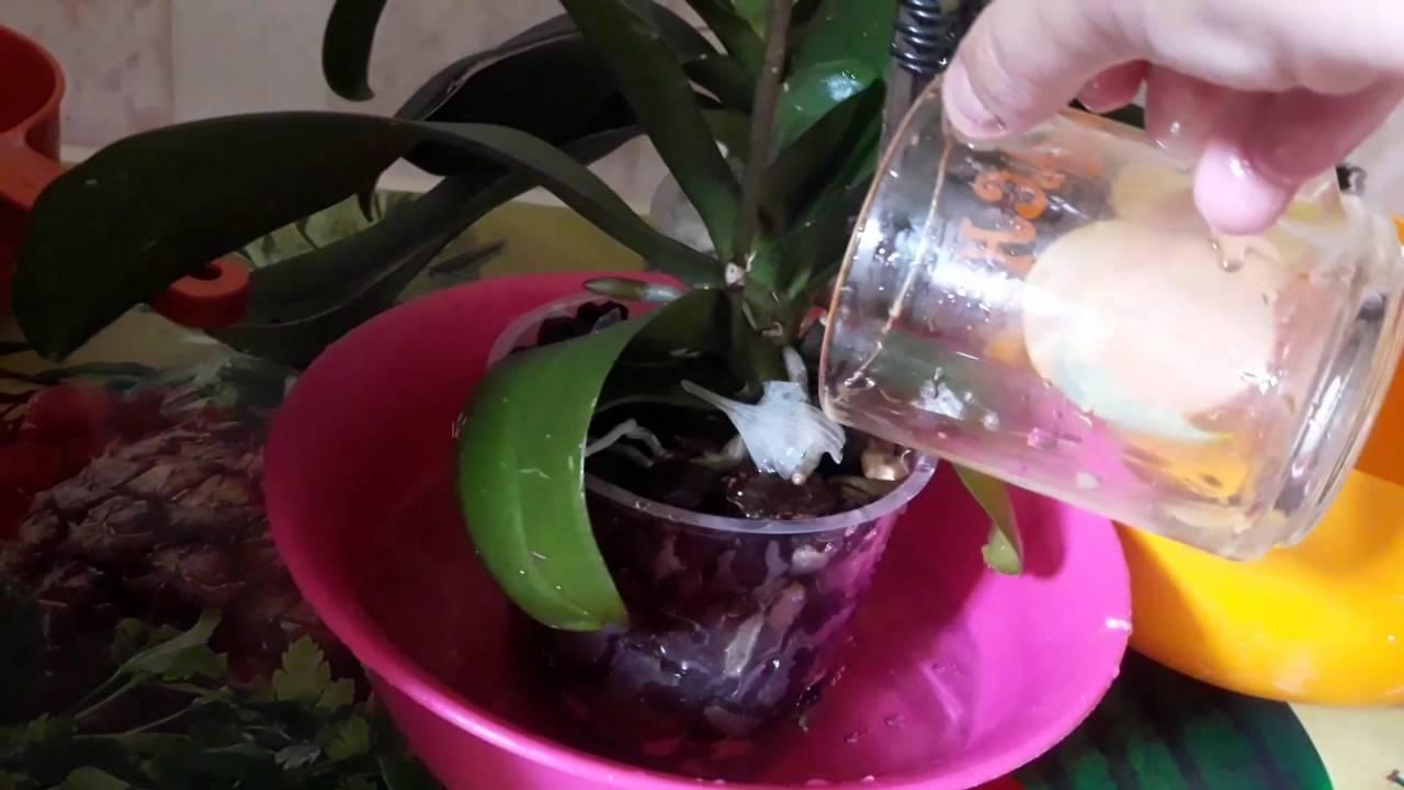 Как поливать орхидею в домашних условиях: пошаговое фото, а также сведения о том, какую воду использовать для правильного увлажнения субстрата