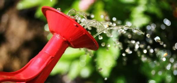 Барбарис арлекин описание — ягоды грибы