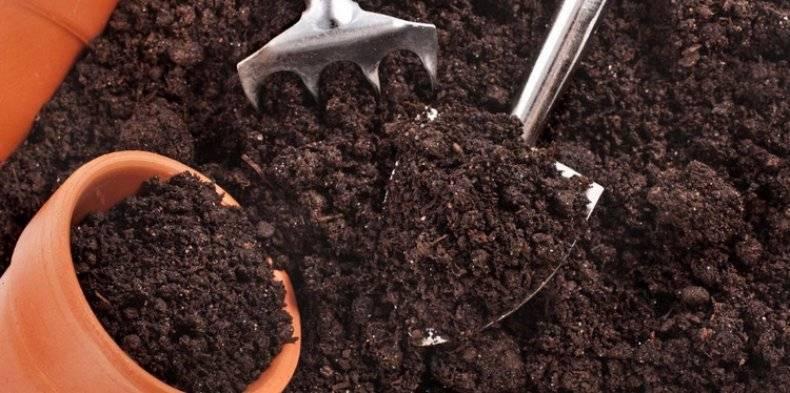 Грунт для спатифиллума: какая земля подойдет для «женского счастья»? какой состав должен быть у готовой почвы для цветка?