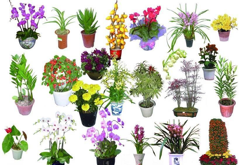 Комнатные растения, фото и названия