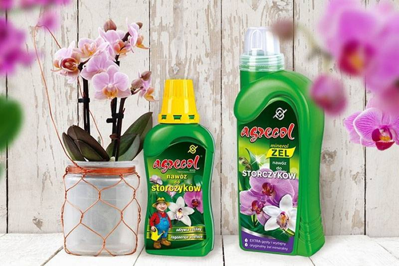 Рассказываем, чем подкормить орхидею в домашних условиях подручными средствами