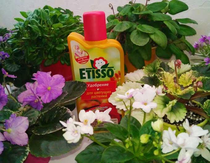 Удобрение для фиалок (для цветения): в домашних условиях