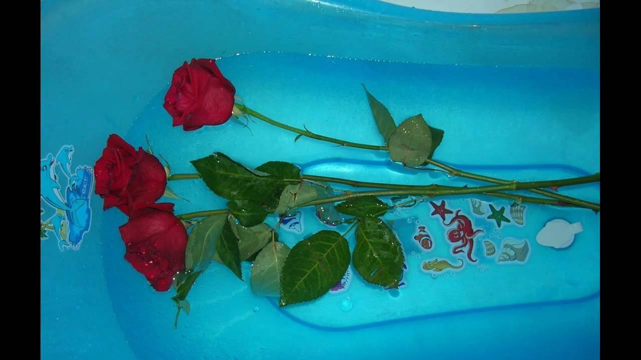 Что добавить в воду, чтобы розы стояли подольше в вазе, как и в какую жидкость нужно ставить срезанные цветы, чтобы сохранить их долго, надо ли положить аспирин?